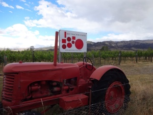 An interestingly named Gibbston valley vineyard